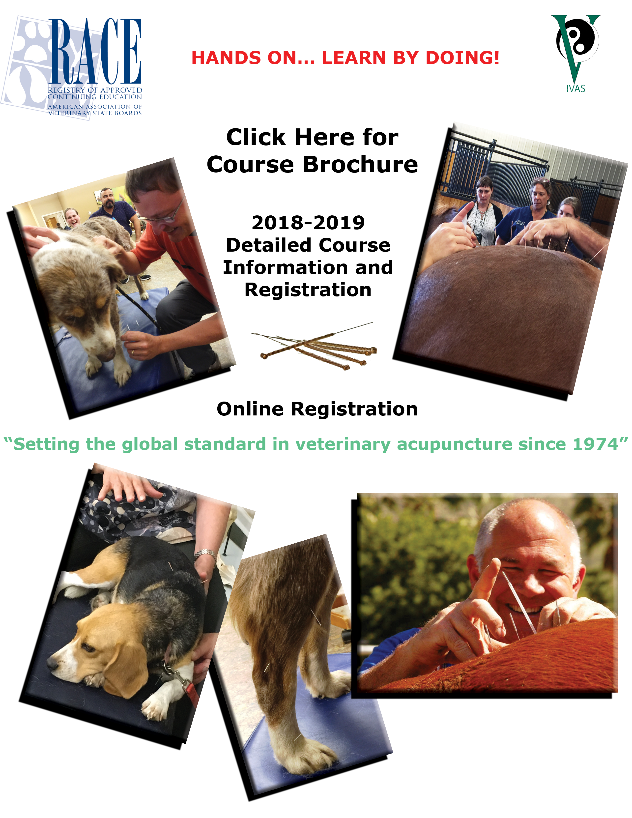 Us Certification Course In Veterinary Acupuncture Ivas